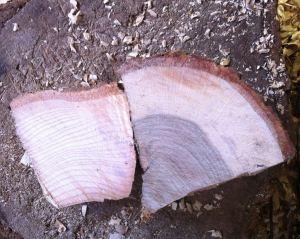 Ash and oak
