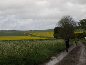 Looking east from Avebury; some twenty bodies are hoofing up and down the lane.