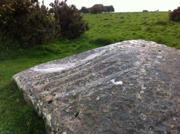 The polissoir - a grinding stone for polishing stone axe heads - one of a number on the Downs but the only one with this variety of toolmarks.
