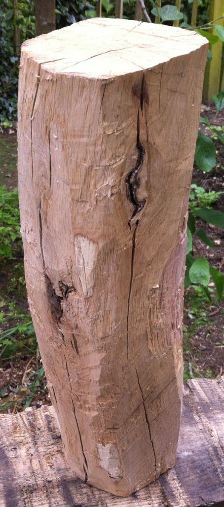 Roughly chopping away the bark and cutting into the sapwood reveals...all sorts of problems.