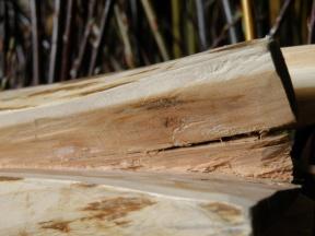 yew wood