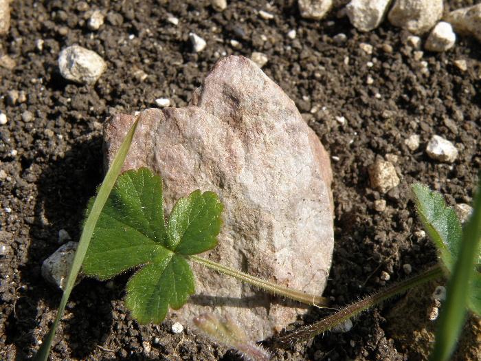 molehill sarsen fragment